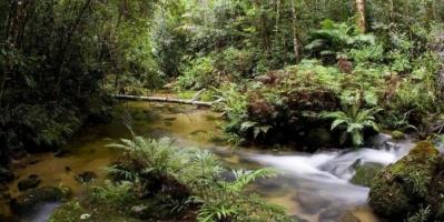 بعد حادث في الغابة ... أسترالي ينجو بأعجوبة من الهلاك