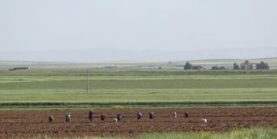 """الحكومة السورية تطلق خطة زراعية """"إسعافية"""" لمواجهة العقوبات"""