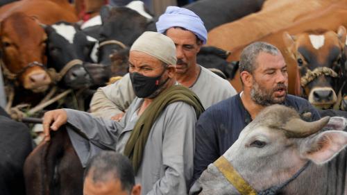 وزارة الصحة المصرية تؤكد أن لحوم الأضاحي والأغذية لا تنقل العدوى بفيروس كورونا