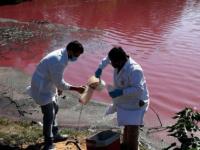 تحول بحيرة إلى اللون الأرجواني من جانب واحد فقط يحير العلماء