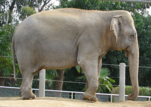 محكمة أمريكية تنظر في أول دعوى قضائية من فيل ضد حديقة الحيوان