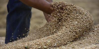 سنوياً.. العراق يفقد 100 ألف دونم زراعي جراء التصحر