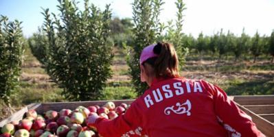 روسيا.. توقعات بوصول الصادرات الزراعية إلى 30 مليار دولار في 2021