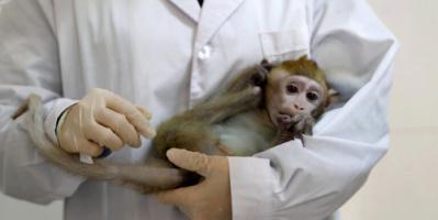 """صحيفة """"غلوبال تايمز"""": وفاة أول حالة إصابة بشرية في الصين بـ""""الفيروس القردي B"""""""