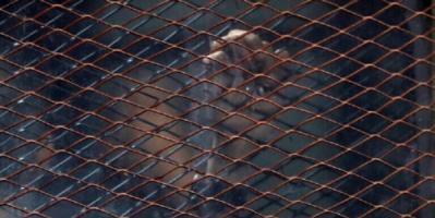 """نزلاء السجون العربية يخرجون بالآلاف بـ""""عفو عند المقدرة"""".. لماذا؟ وهل ينسجم هذا مع القانون؟"""