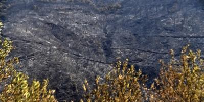 """الجيش الجزائري: المغرب """"متورط بشكل أو بآخر"""" في إشعال حرائق الغابات الأخيرة"""
